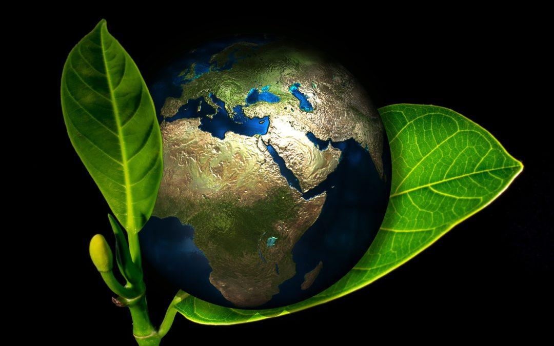 Olimpiada Wiedzy Ekologicznej etap szkolny